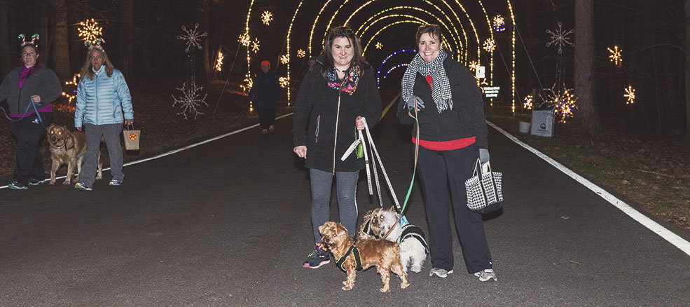 Leashes 'n' Lights